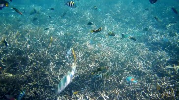 Tioman Under Water_Moment6